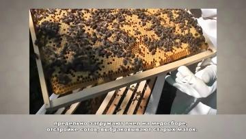 Обучение пчеловодству урок № 3 - Сезонные работы на пасеке