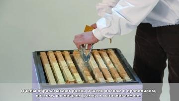 Обучение пчеловодству урок № 1 - Организация пасеки, правила руководства, инвентарь.